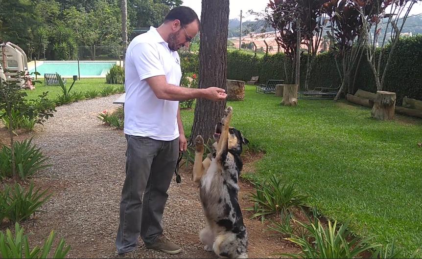 Terapia de cães